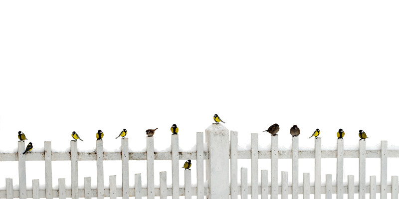 Why You Need to Get Off the Fence